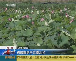 闻喜:官庄村有了莲花公园
