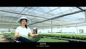 【了不起我的家乡】 芮城农业