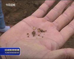新绛县阳王镇发展金蝉林下养殖 拓宽村民致富渠道