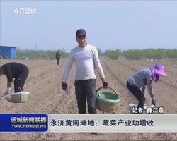 永济黄河滩地:蔬菜产业助增收